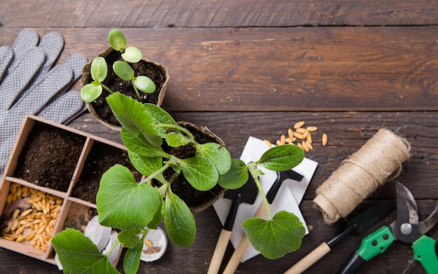 Gartenbau. sämlinge gurke und birne im torftopf mit verstreutem boden und gartengerät. zum wachsen auf betonoberfläche einstellen.