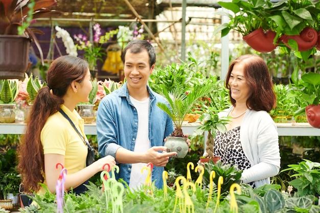 Gartencenter-mitarbeiter fragen kunden, ob sie hilfe bei der auswahl der cycas-pflanze benötigen