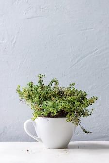 Gartengemüse für die küche