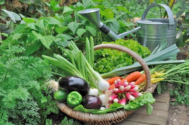 Gartengemüse