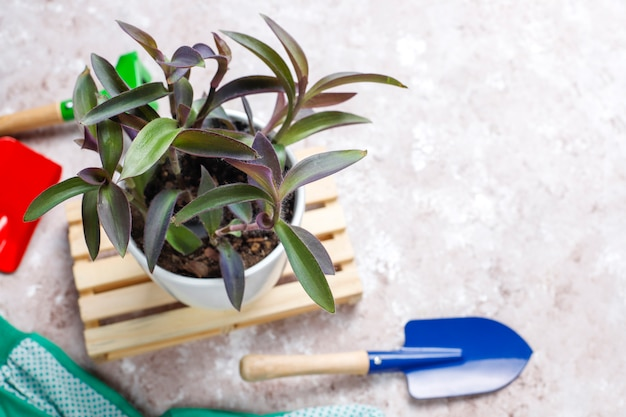 Gartengeräte auf hellem hintergrund mit zimmerpflanze und handschuhen, draufsicht