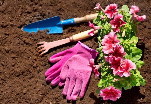 Gartengeräte und blumen auf bodenhintergrund, draufsicht