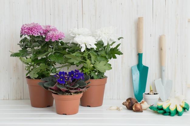 Gartengeräte und blumen auf weißem holztisch