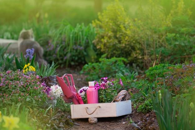 Gartengeräte und erwachsene hauskatze, die im gras sitzen