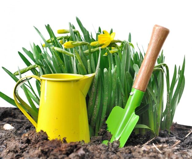 Gartengeräte und narzissen