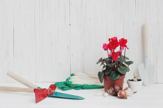 Gartengeräte und rote alpenveilchen auf weißem holztisch