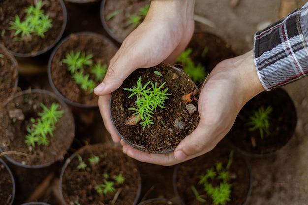 Gartenkonzept ein bauer, der die grünen sämlinge aussortiert, bevor er sie aus den töpfen nimmt, um im vorbereiteten bodengrundstück zu wachsen.