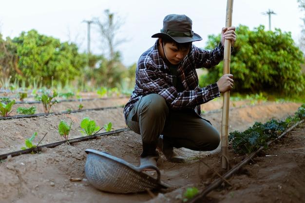 Gartenkonzept ein junger bauer, der den schmutz um die pflanzen schaufelt, damit sauerstoff leicht durch die wurzeln gelangen kann.