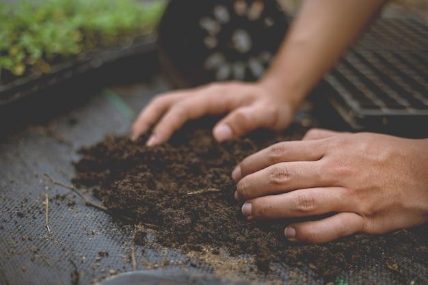 Gartenkonzept mehrere grünpflanzen in größere töpfe umgetopft, damit die pflanzen größer werden können.