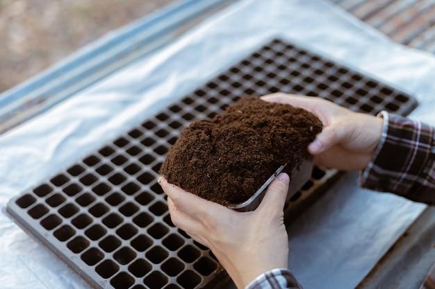 Gartenkonzept zwei hand eines gärtners, der reichen schwarzen boden in baumschultabletts einfügt, die sich auf den anbau von sämlingen vorbereiten.
