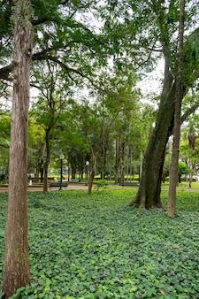Gartenlandschaft mit gras und bäumen. vertikale ebene