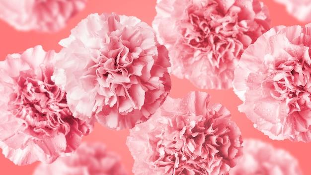 Gartennelkenblumen auf korallenrotem farbhintergrund