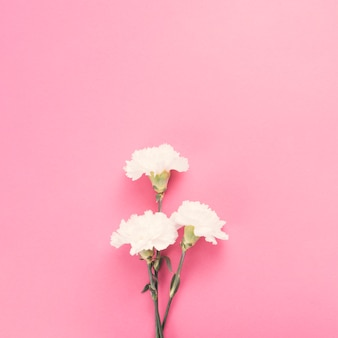 Gartennelkenblumen auf rosa tabelle