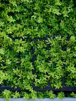 Gartenpflanzen für die wand