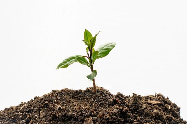 Gartenschaufel auf weißem hintergrund mit jungpflanze