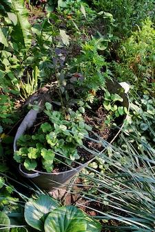Gartensommerblumen in den töpfen