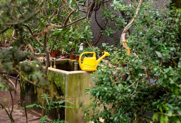 Gartenwerkzeuge. gelbe gartengießkanne. schöner botanischer garten. schöne grüne pflanzen. grün herum.