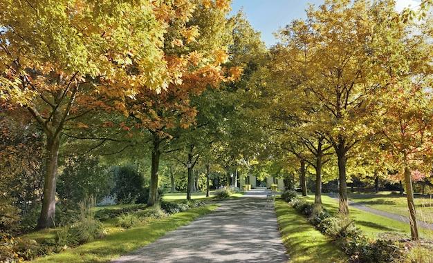 Gasse in einem schönen park, der von buntem laub von bäumen im herbst an einem sonnigen tag begrenzt wird