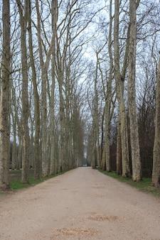 Gasse mit weglinie der bäume im versailler garten im winter.