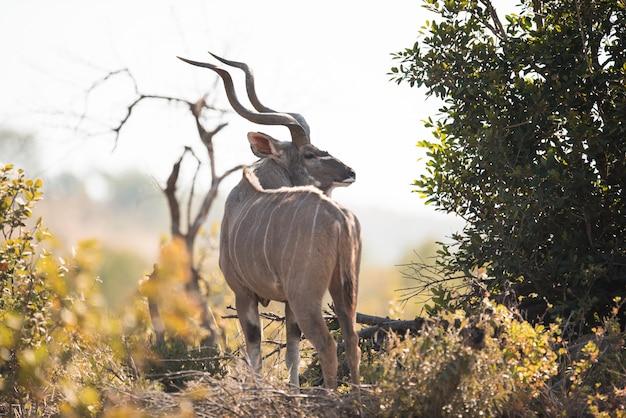 Gazelle steht in der nähe von bäumen