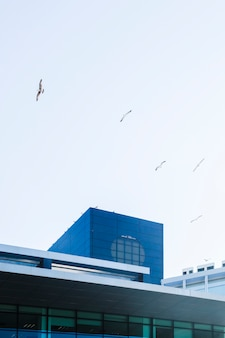 Gebäude mit vögeln