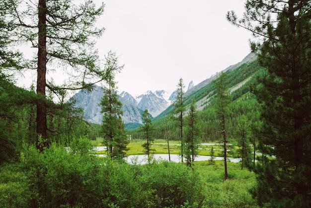 Gebirgsbach hinter nadelbäumen gegen riesige schneebedeckte berge. wasserstrom im bach. reiche vegetation und nadelwald des hochlands. erstaunliche atmosphärische landschaft der majestätischen natur.