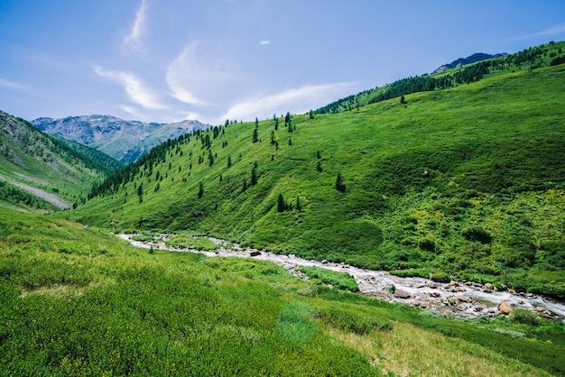 Gebirgsbach im grünen tal unter reicher vegetation des hochlands am sonnigen tag.