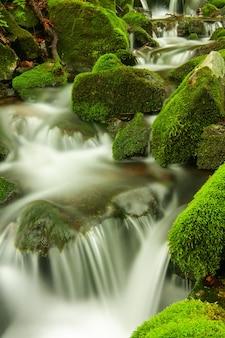 Gebirgsbach, kleiner fluss mit felsen, die mit grünem moos bedeckt sind