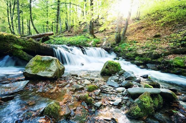 Gebirgsbachwasserfall im grünen wald