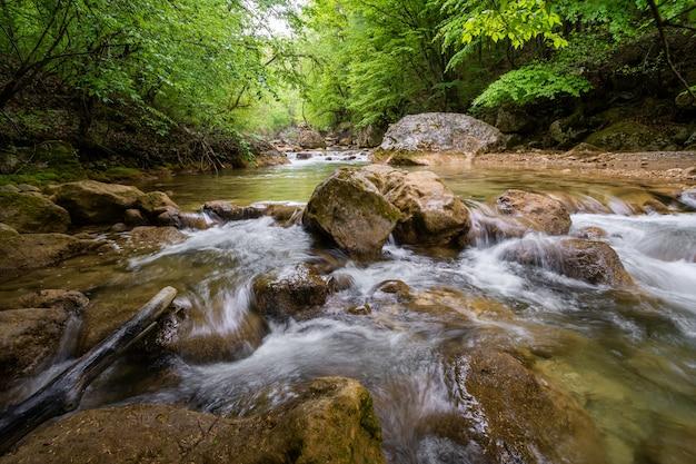 Gebirgsfluss, der den grünen wald durchfließt