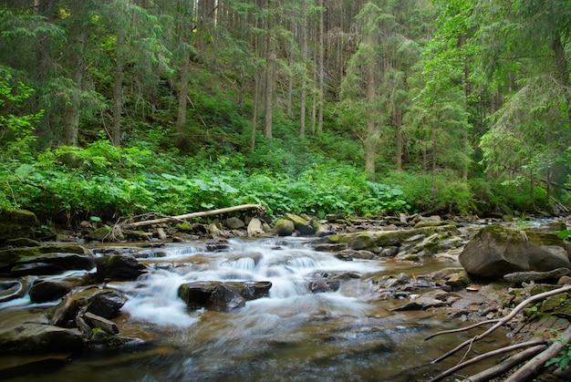 Gebirgsfluss, der durch den grünen wald fließt. stream im wald.