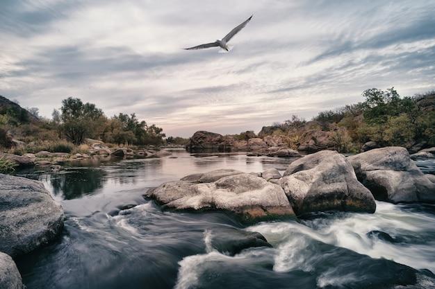 Gebirgsfluss mit rollen auf steinen und möwe im himmel