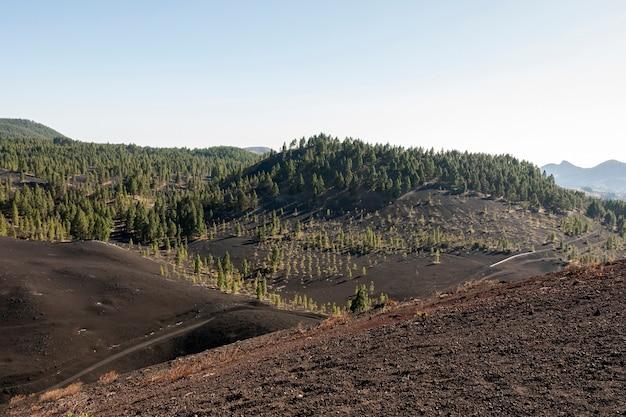 Gebirgswald auf vulkanischem boden