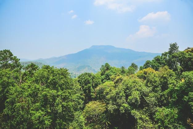 Gebirgszug und immergrüne bäume an einem sonnigen tag