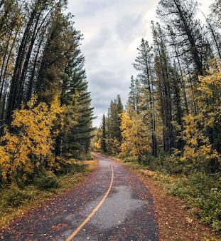 Gebogene asphaltstraße im kiefernwald auf herbst