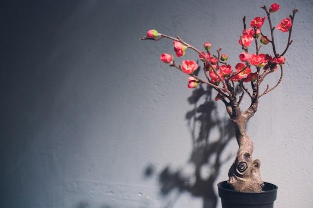 Gebogener bonsai-baum mit roten früchten auf einem tisch gegen eine wand.