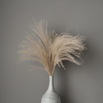 Gebräuntes schilf, pampasgrasstrauß im tontopf auf grau