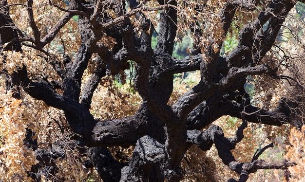 Gebrannte bäume im wald