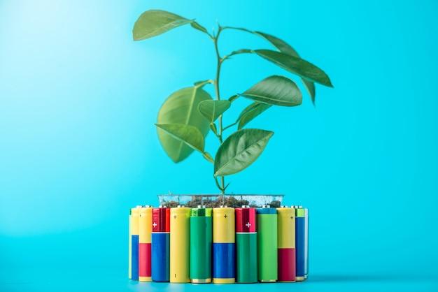 Gebrauchte aa-batterien und eine pflanze mit grünen blättern