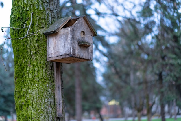 Gebrochenes vogelhaus auf einem baum montiert