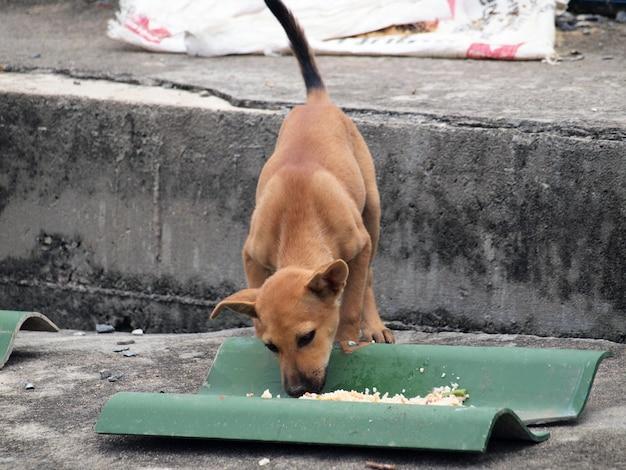 Gebürtiger hund, der sein essen isst