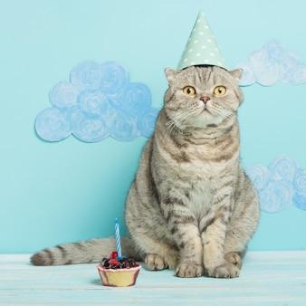Geburtstagskatze, herzlichen glückwunsch zum feiertag