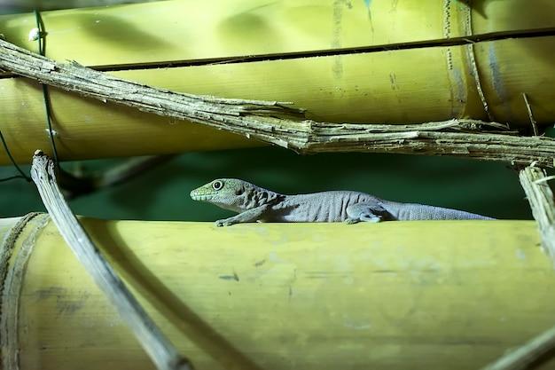 Gecko auf einem baum