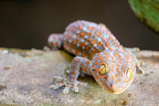 Gecko fiel von der wand in einen wassertank und kletterte auf den rand des beckens