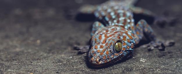 Gecko ist ein reptil