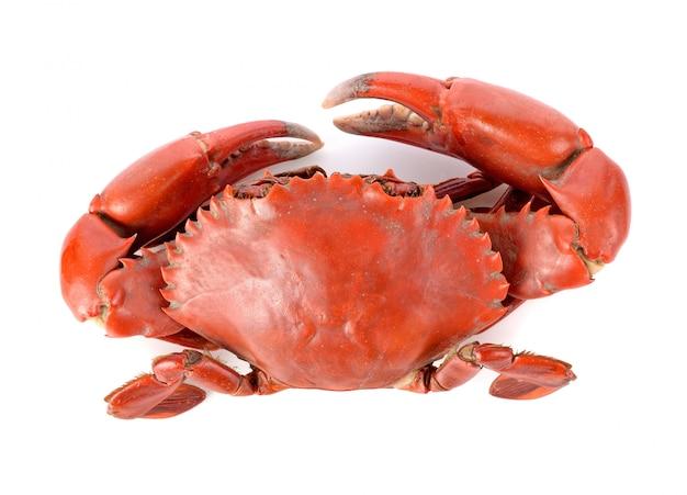 Gedämpfte krabbe lokalisiert auf weißem hintergrund