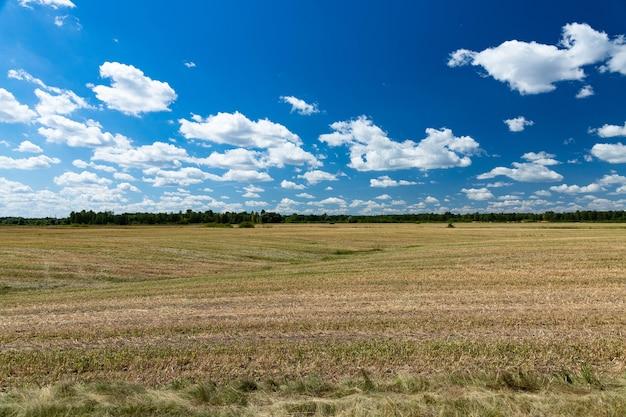 Geerntetes, gemähtes landwirtschaftliches weizenfeld. ein symbol für stabilität.