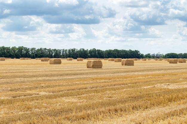Geerntetes getreide, weizenfeld, mit heuhaufen aus stroh, ballen rechteckige form auf dem wolkigen blauen himmel. landwirtschaft, ländliche wirtschaft konzept.