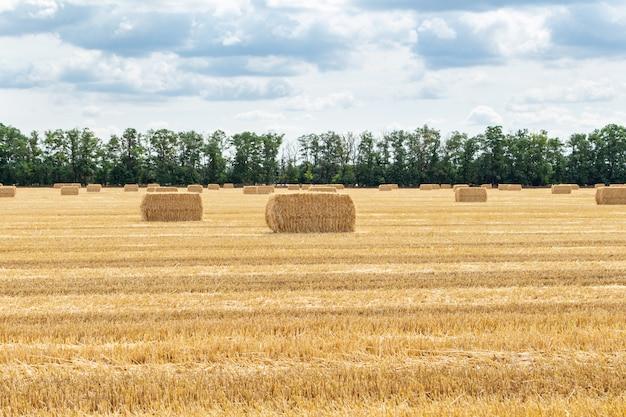 Geerntetes getreidefeld mit strohheuhaufen am bewölkten blauen himmel. landwirtschaft, landwirtschaft, ländliche wirtschaft konzept