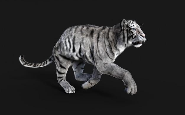 Gefährlicher weißer bengal-tiger lokalisiert auf dunklem hintergrund mit beschneidungspfad, 3d illustration.